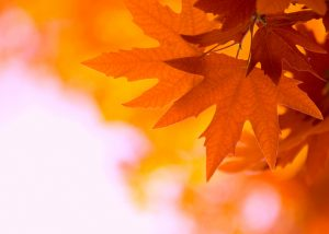 Adobe shines the light in autumn